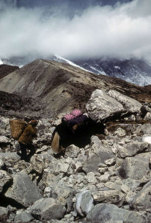 loads: Sherpa porter and yak carrying loads, Chyungma Pass, in Khumbu Himalaya, Nepal   Stock Photo