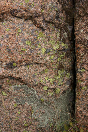 Lichen & moss on pink granite,  Cadillac Mountain, Mount Desert Island, Acadia National park, Maine, New England   Stock Photo