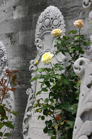 suleyman: Yellow rose & tombstones, Islamic cemetery Suleymanie Mosque Istanbul Turkey   Stock Photo
