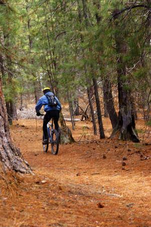 ponderosa pine: Mountain biker on conifer forest trail,  Deschutes River trail, Central Oregon   Stock Photo