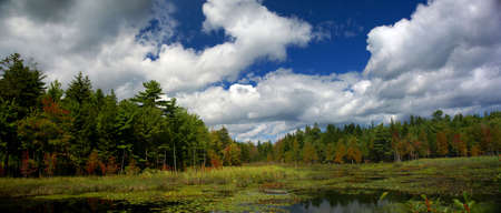 New England marsh & lily pond,  Long Pond, Mount Desert Island, Acadia National park, Maine, New England   photo