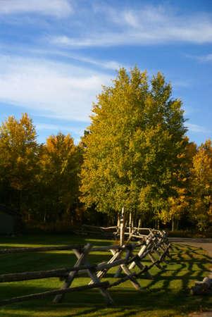 Autumn road and rail fence, Golden aspens, Moose - Wilson Road, Teton village, Grand Teton National Park, Wyoming   photo