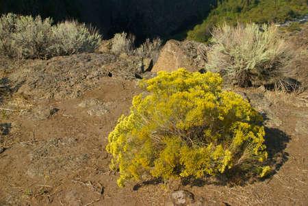talus: Desierto de los �rboles y los acantilados de basalto y talud de la antigua corriente de lava, Crooked River Canyon, Central Oregon