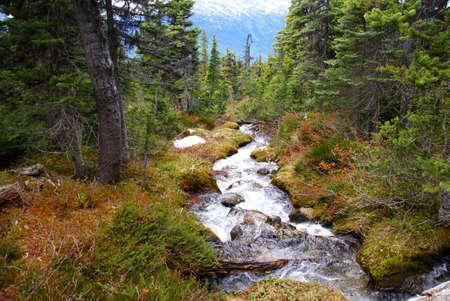 dewey: Cascading stream, Dewey Lakes trail, Skagway, Alaska