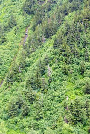 가파른 산 경사면에 침 엽 수와 활엽수의 울창 한 숲, Dewet 호수 흔적, 주노, 알래스카