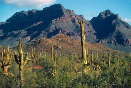 southwest usa: Saguaro cactus, and rocky cliffs and ridges,    Organ Pipe National Monument, Arizona, Southwest USA