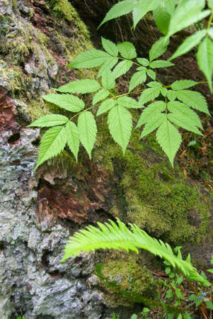 floor covering: Ground cover on forest floor,  Tiger Mountain, Pacific Northwest
