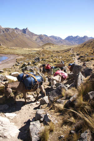 mule train: Mule train, carrying loads, with Cuyoc mountain in background,  Cordillera Huayhuash, Andes,  Peru, South America
