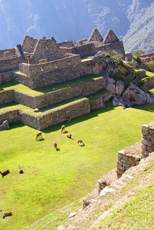 テラスのある広場に放牧ラマ、インカの遺跡マチュピチュ、ペルー、南アメリカ 写真素材