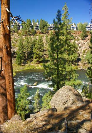 ponderosa: Ponderosa Pine and modern house, on hillside above canyon of   Deschutes River, Central Oregon