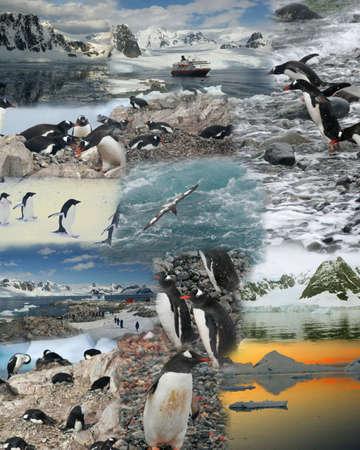 Montage - Antarctica penguins, cruise ship, ocean, glaciers mountains     photo
