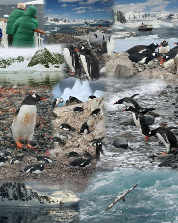 Montage - Antarcticapenguins, cruise ship, ocean, glaciers mountains  版權商用圖片