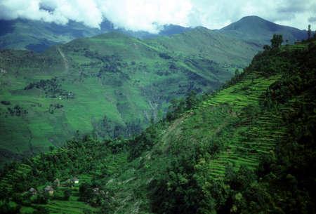 hillsides: Rice paddies as layers of terraced fields on steep hillsides,   Nepal Himalaya, Asia Stock Photo