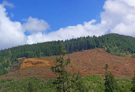 oregon cascades: Panorama - Clear cut logging slope,  just outside Willamette National Forest,  Central Oregon Cascades Stock Photo