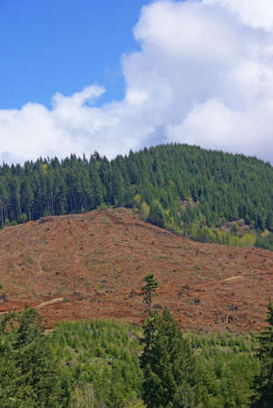 logging: Clear cut logging slope,  just outside Willamette National Forest,  Central Oregon Cascades