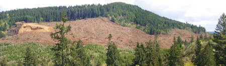 oregon cascades: Panorama  - Clear cut logging slope,  just outside Willamette National Forest,  Central Oregon Cascades