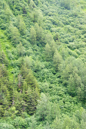 Dense forest of conifers and hardwoods on steep mountain slope, Dewet Lakes trail, Juneau, Alaska