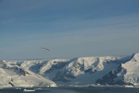 Icebergs, mountains and  blue sky,   Neko Harbor, Andvord Bay, Antarctica 版權商用圖片
