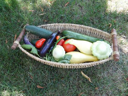 bounty: Verano recompensa - FreshAIR verduras en una canasta tejida jard�n de Seattle, noroeste                     Foto de archivo