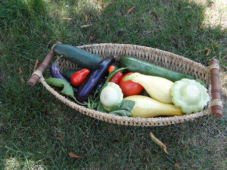 bounty: Summer bounty - Fresh vegetables in a woven basket   Seattle garden, Pacific Northwest                     Stock Photo
