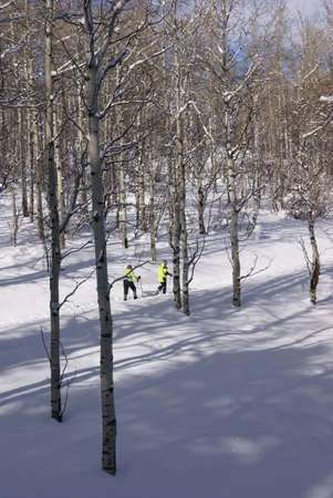 Bare winter aspens with snowshow hikers,  Cordillera, Colorado, Rocky Mountains photo