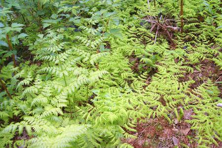 양치와 덤불, 주노 트레일, 주노, 알래스카