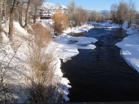 Yampa River and cottonwoods in winter,   Steamboat Springs,  Colorado