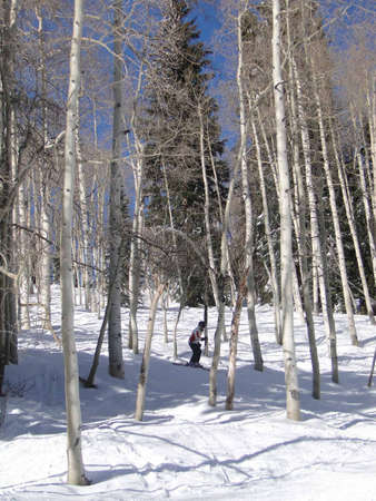 western slope: Lone skier weaves her way through bare winter aspens   Steamboat Springs,  Colorado    Stock Photo