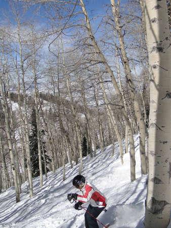 STEAMBOAT SPRINGS, COLORADO - 30 de JAN - Lone esquiador teje su camino a través de Álamos de invierno desnuda sobre el 30 de enero de 2010, en Steamboat Springs, Colorado  Foto de archivo - 6896270