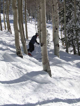 STEAMBOAT SPRINGS, COLORADO - 30 de JAN - Skier se mueve a través de Álamos de invierno desnuda sobre el 30 de enero de 2010, en Steamboat Springs, Colorado  Foto de archivo - 7137972