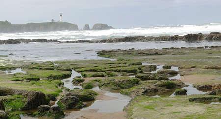 Seaweed and kelp on beach rocks at low tide, Oregon coast Stock Photo - 7258949
