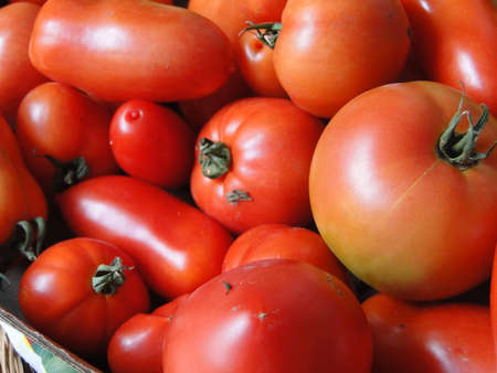Tomatoes,   fresh from the garden and ready to eat
