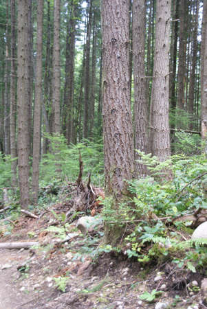 floor covering: Ground cover on forest floor,