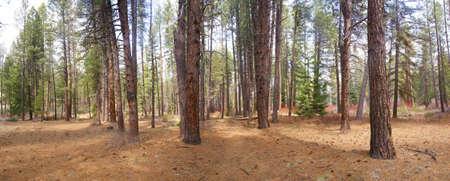 Panorama, pins ponderosa, Deschutes River Trail, Oregon centrale  Banque d'images - 9644834