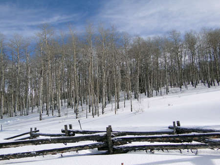 Winter day with bare winter aspens, blue sky, and rail fence, Above Vail Valley,Colorado                      photo