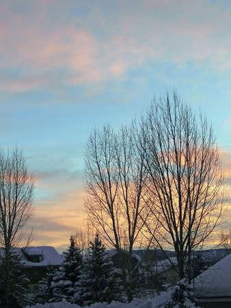 Puesta de sol con álamos en invierno desnudos, Steamboat Springs, Colorado Foto de archivo - 9972116