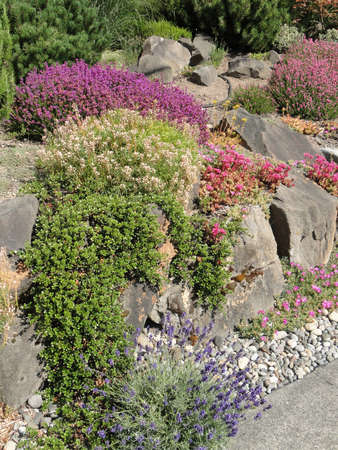 Heathers and drought tolerant plants in a Seattle garden.