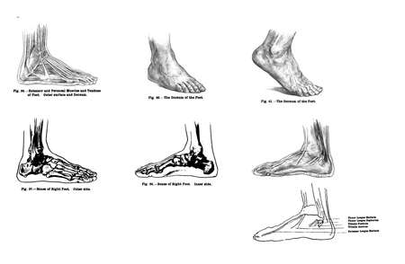 7 views of the human foot, muscles and bones from out of print, Muscles