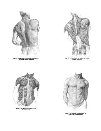 4 Standpunten van het menselijk rugspieren, en torso van meer gedrukt boek, Menselijke anatomie voor kunst studenten door Sir Alfred Downing Fripp, Ralph Thompson, Harry Dixon - 1911