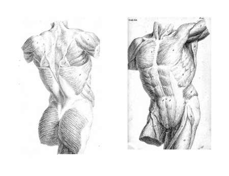 medical drawing: 2 Views of the human torso, muscles and internal organs  from The anatomy of the human body by  William Cheselden in 1763.