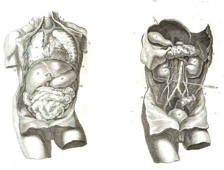 2 Views of the human torso, muscles and internal organs  from The anatomy of the human body by  William Cheselden in 1763.