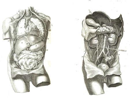 organos internos: 2 Vistas del torso humano, los m�sculos y los �rganos internos de la anatom�a del cuerpo humano por William Cheselden en 1763. Foto de archivo