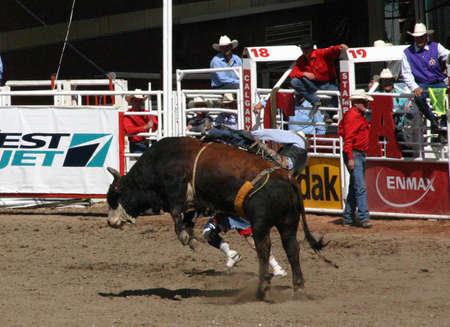 calgary stampede: CALGARY CANADA JULY 2004 - Cowboy trying to ride a wild bull, Calgary Stampede, Alberta Canada