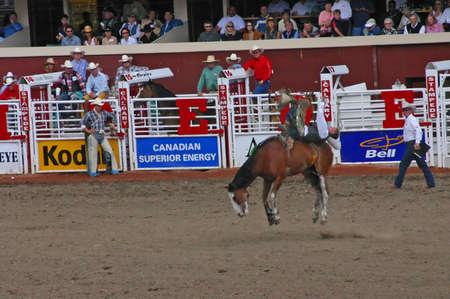 CALGARY CANADA JULY 2004 -  Cowboy riding bucking bronco, Calgary Stampede, Alberta, Canada 報道画像