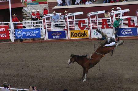 CALGARY CANADA JULY 2004 -  Cowboy riding bucking bronco, Calgary Stampede, Alberta, Canada