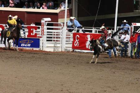 calgary stampede: CALGARY CANADA JULY 2004 -  Cowboy riding bucking bronco, Calgary Stampede, Alberta, Canada Editorial
