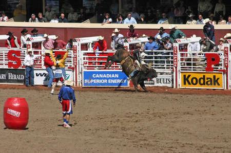 CALGARY CANADA JULY 2004 -  Cowboy trying to ride a wild bull, Calgary Stampede, Alberta, Canada
