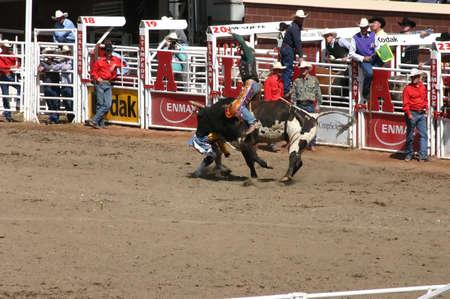 calgary stampede: CALGARY CANADA JULY 2004 -  Cowboy trying to ride a wild bull, Calgary Stampede, Alberta, Canada