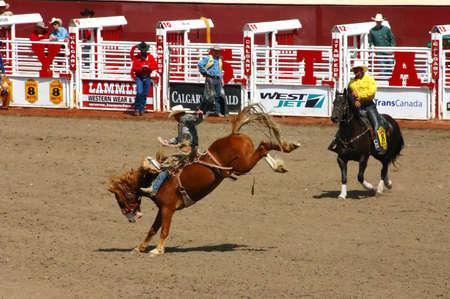 Cowboy op wilde stier, de Stormloop van Calgary, Alberta Canada