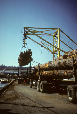 unloading: Crane unloading logging trucks into sorting pond,  Shelton, Pacific Northwest  Editorial